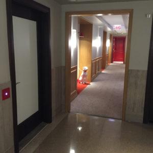 Hallway (Pet Friendly Rooms)