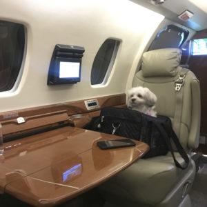 Doggy Seat :)