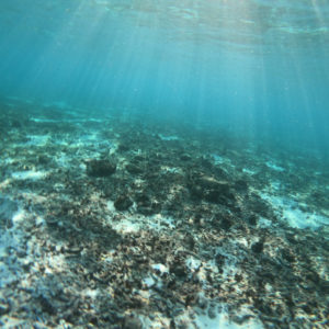 Snorkeling near Villa 508